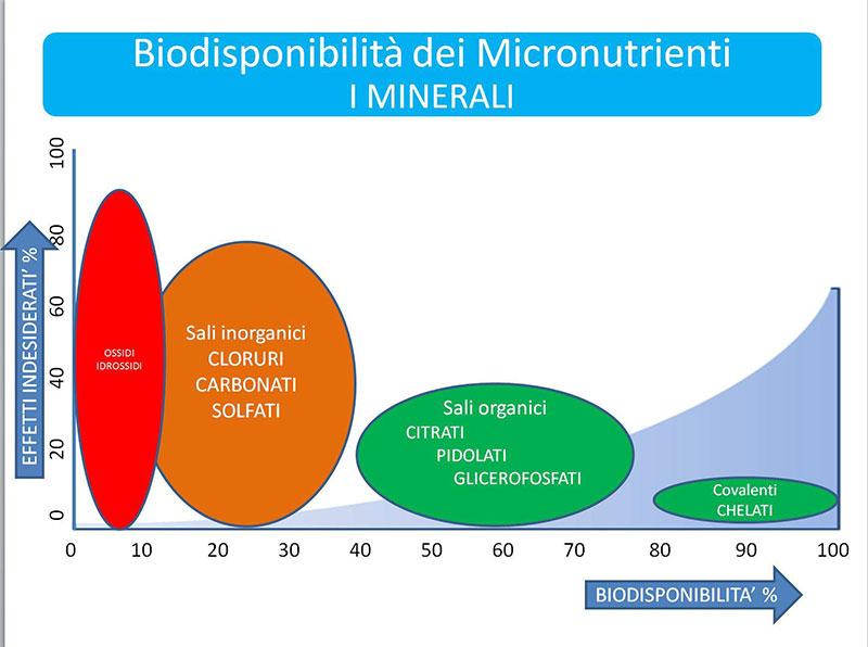 biodisponibilita minerali