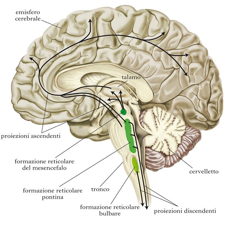 istamina neuroT