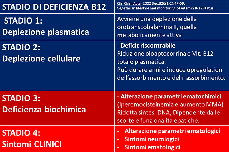 deficienza vit B12