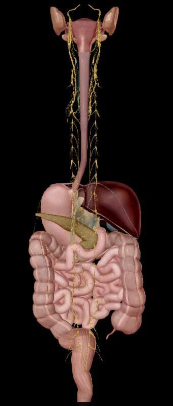 stress e intestino