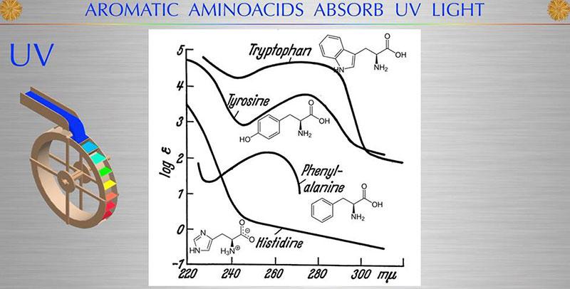 aminoacidi che assorbono la luce solare
