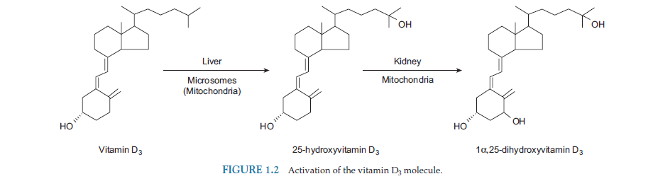 vitamin D3 - attivazione