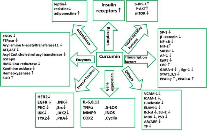 Azione pleiotropica della curcumina