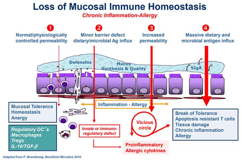 permeabilità intestinale
