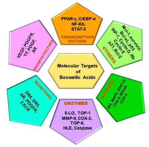 Target molecolari degli acidi Boswellici