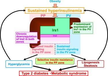insulino-resistenza 3