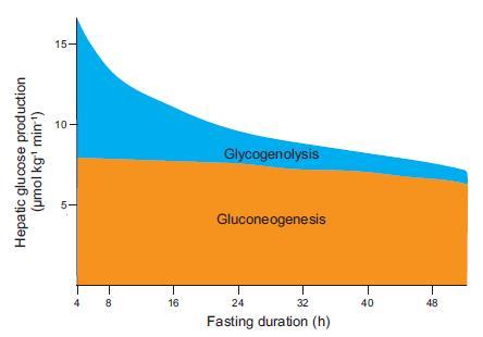 insulino-resistenza 7