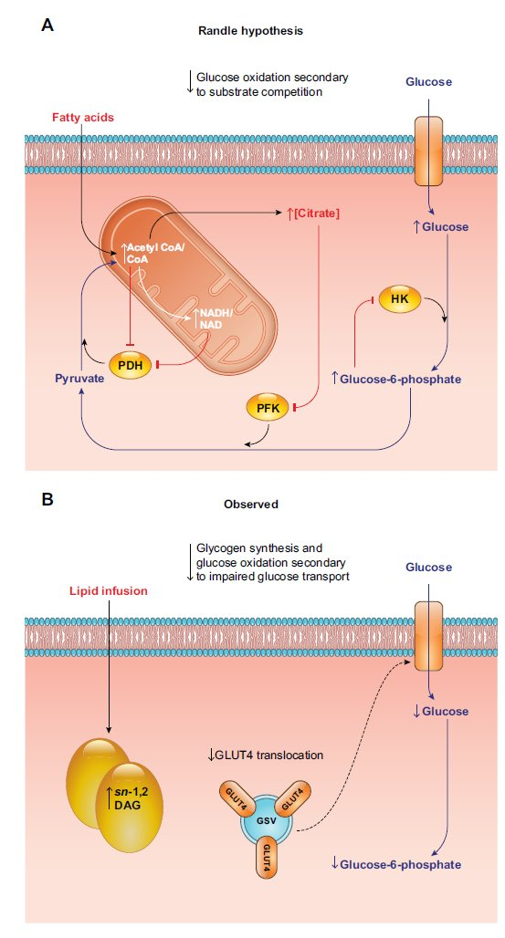 insulino-resistenza 13