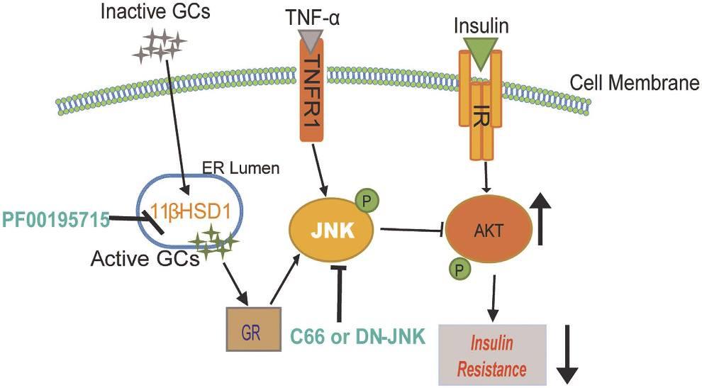insulino-resistenza 15